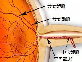 视网膜中央动脉