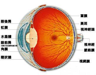 造成视网膜脱落的原因