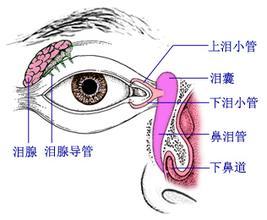 干眼病有哪几种?白领是高发人群