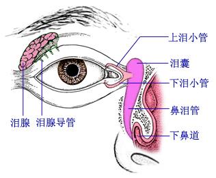 """干眼症--""""泪液膜""""功能分泌不足"""