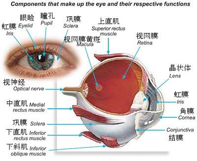 结膜在哪里?来看看它的常发眼病