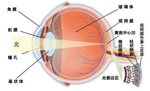 视网膜脱落:早治疗预后良好