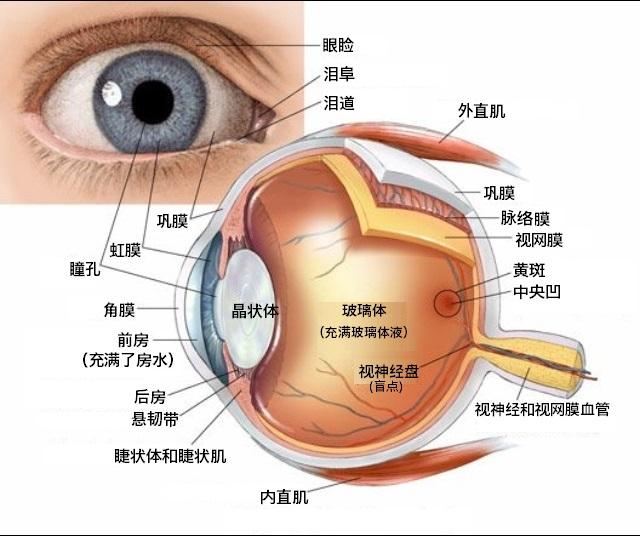 儿童做斜视手术是否安全?
