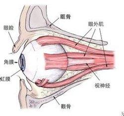 小孩做斜视手术,单条肌肉手术较安全