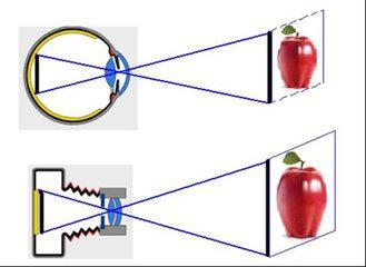 眼的屈光系统与验光配镜